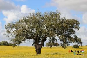 """Olhar a Primavera no Alentejo: 50 fotografias"""
