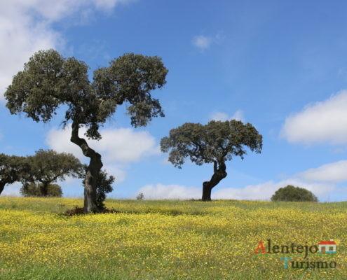 Azinheiras e campos amarelos